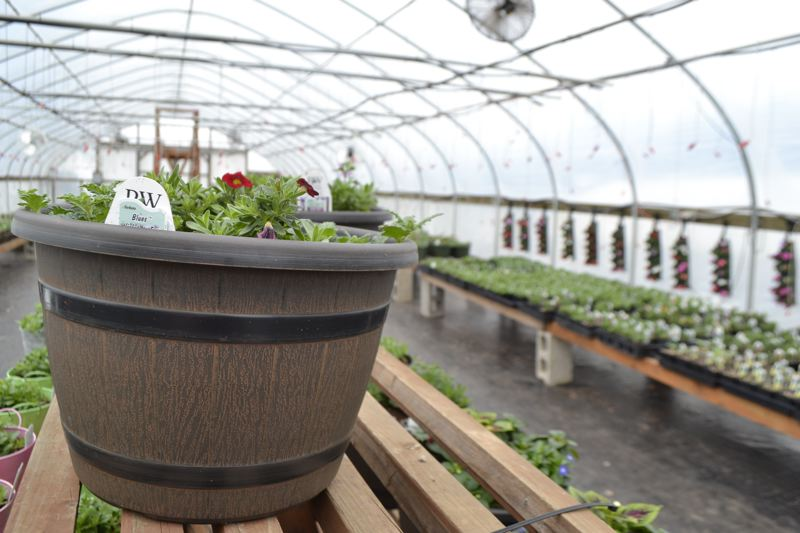 POST PHOTO: BRITTANY ALLEN - Bushue's Family Farm in Boring is hosting its fifth-annual Taste of Local event from 10 a.m. to 4 p.m. Saturday, April 28, during which about a dozen vendors will provide samples of their products and the Bushue's will have their greenhouses open with plants for sale.