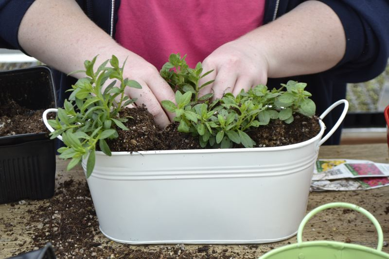 POST PHOTO: BRITTANY ALLEN - The Bushues offer everything from vegetable starts to customized flower pots.