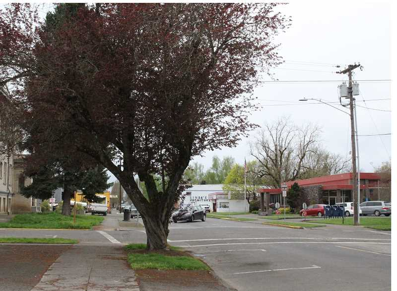LINDSAY KEEFER - Trees along First Street could be replaced as part of the First Street improvement plan.