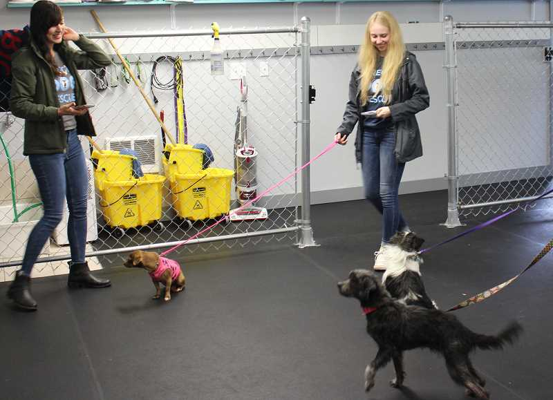 Oregon Dog Rescue showed off a number of dogs who were up for adoption, most of whom came from California.