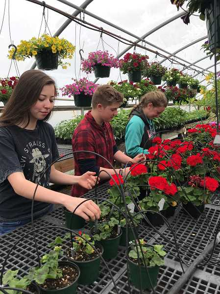 SUBMITTED PHOTO - Students (from left to right) Kaya Luttrell, Trenton Horichok and Shelby Nunn take care of plants in preparation for the sale.