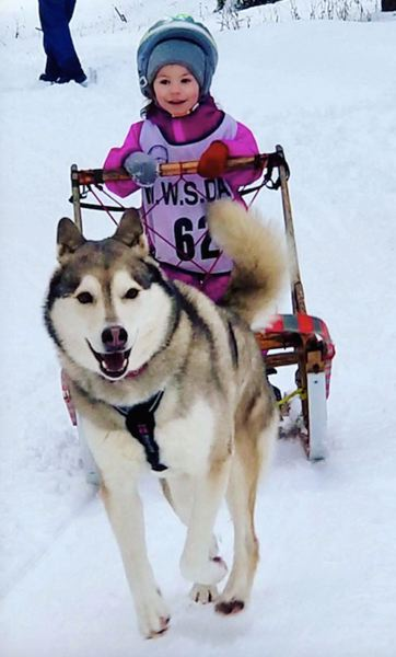 CONTRIBUTED PHOTO: GENEVA LYON - Shade Snail, running in her first peewee race with Lolo at the Conconully Snow Dog Super Mush.