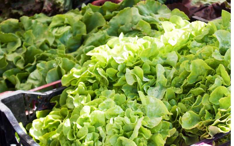 PMG FILE PHOTO - The Centers for Disease Control have connected a recent E. coli outbreak in the Northwest to tainted romaine lettuce. Safeway and Fred Meyer stores in Newberg have pulled product emanating from Yuma, Ariz., from their shelves.
