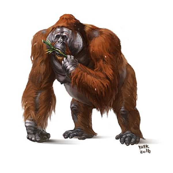CONTRIBUTED PHOTO: KAEKART VIA CREATIVE COMMONS - A recreation of what the Gigantopithecus may have looked like, an ancient ape that Bigfoot believers think could explain how the creature made it to North America.