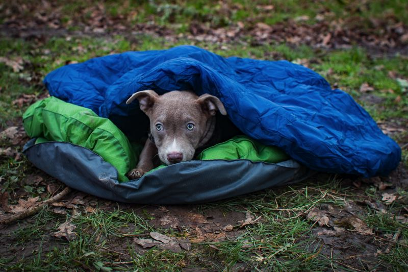 COURTESY PHOTO - Rachel Bauman's rescue dog, Amy, snuggles up inside the DoggyBag.