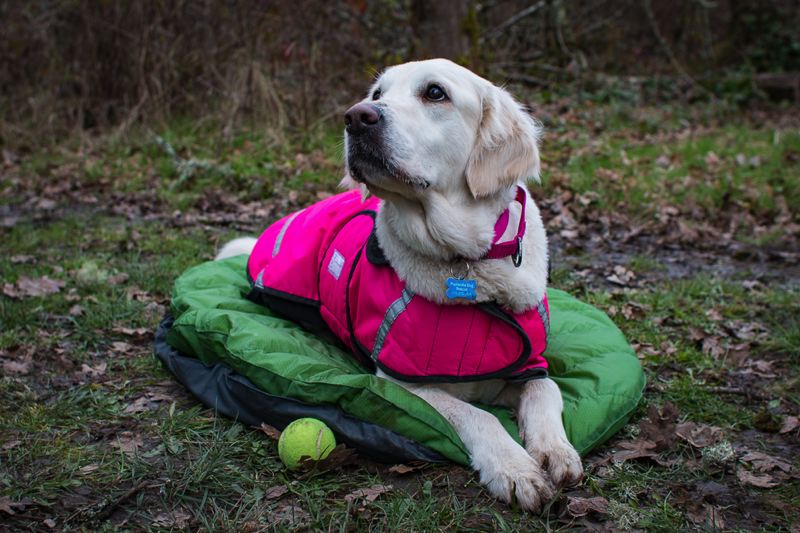 COURTESY PHOTO - The DoggyBag is a two-part product with pad and quilt. The pad (shown here) can also be used as a durable homebase for canines, and both parts are machine washable.