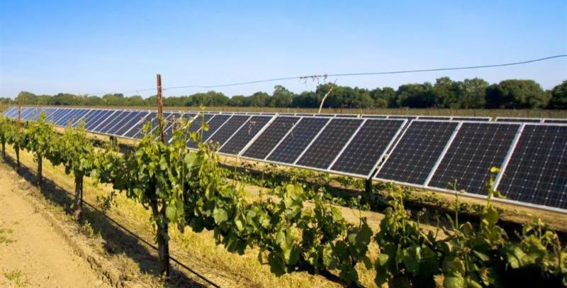 COURTESY OF SOLAR OREGON - Solar powered vineyards will be shown on a wine tour Saturday, May 5.