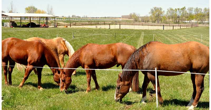 The May 5 workshop for horse owners will deal primarily with health pasture.