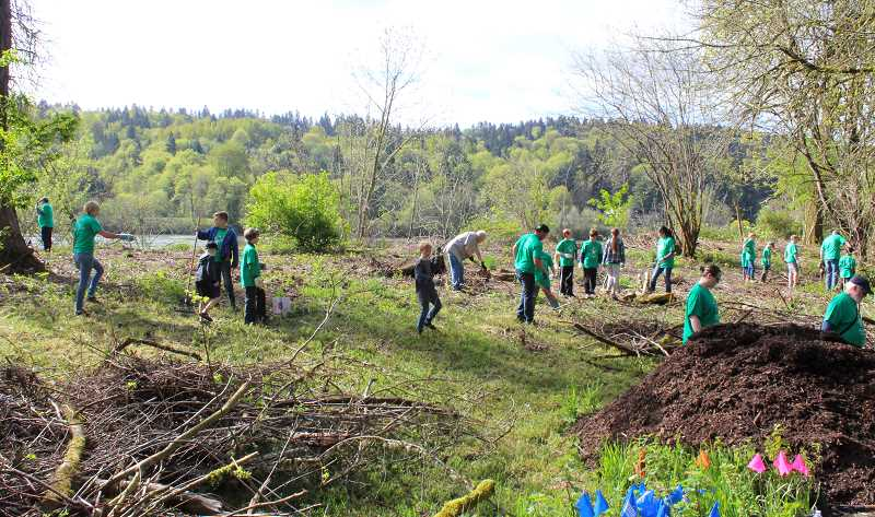 TIDINGS PHOTO: PATRICK MALEE - Organizers estimate that nearly 150 volunteers turned up at the Willamette Park Earth Day event alone.