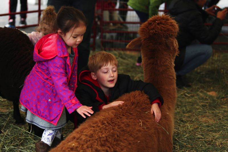 JESSIE DARLAND - Kids enjoy petting an alpaca at the petting zoo at the carnival following the 82nd Avenue Parade.