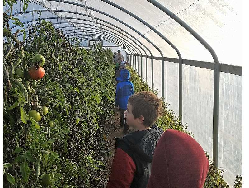 COURTESY: CASEY BRENNAN - Casey Brennan's second grade class explores the green house at Our Table Cooperative's farm in Sherwood.