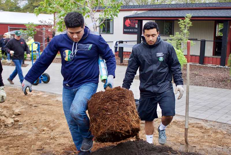 OUTLOOK PHOTO: CHRISTOPHER KEIZUR - Edgar Pazos and Elvis Vakapuna helped plant trees outside of Tsuru Island during the citys fifth-annual Green and Clean event.