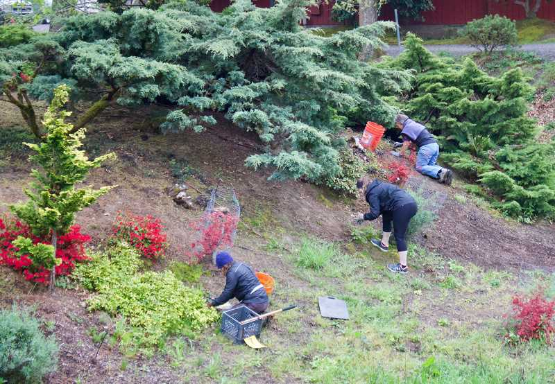 OUTLOOK PHOTO: CHRISTOPHER KEIZUR - Volunteers work to remove invasive species along the outer bank of Tsuru Island, Greshams Japanese garden.