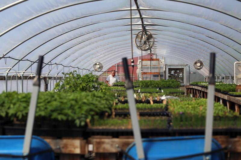JESSIE DARLAND - Plants are started out in a greenhouse until they're ready to be transplanted into the land at Headwaters Farm.