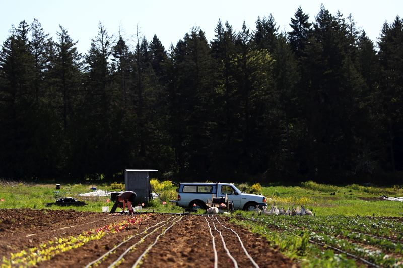 JESSIE DARLAND - Farmers at Headwaters Farm adjust their irrigation systems. Drip irrigation is more environmentally friendly, and brings the water directly to the plant rather than spraying it across the whole field.