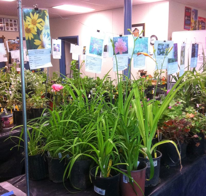 FILE PHOTO - The Salvation Army will hold their 27th annual benefit plant sale Saturday, May 12. See listing for details.