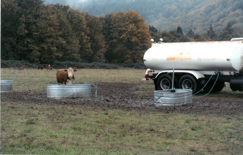 SPOTLIGHT FILE PHOTO - A cow seized from Jane Baum in 2012 by Columbia County and the Oregon Humane Society.