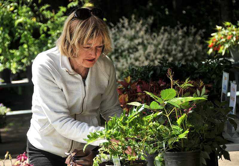 TIDINGS PHOTOS: VERN UYETAKE - Patsy Bruggere of West Linn decides on which plants to buy.