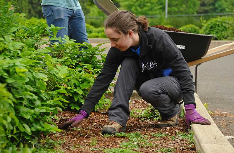 Stephanie Villegas works on weeding at Memorial Park.