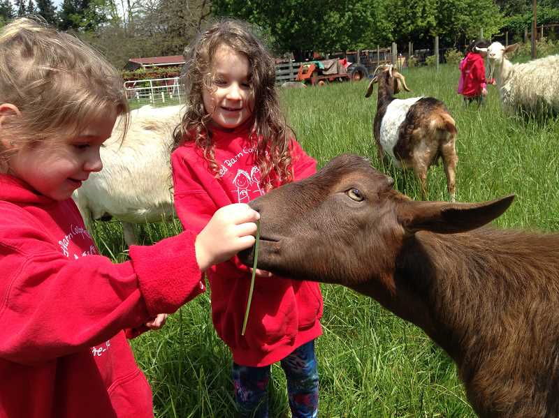 CONTRIBUTED PHOTO: KIT COLLINS - Young visitors to Out to Pasture Sanctuary share a moment with Stanley the goat.