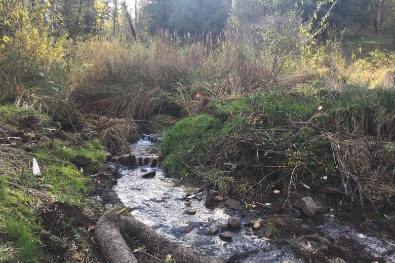 COURTESY: METRO  - Brigman Creek flows freely after the removal of a dam.