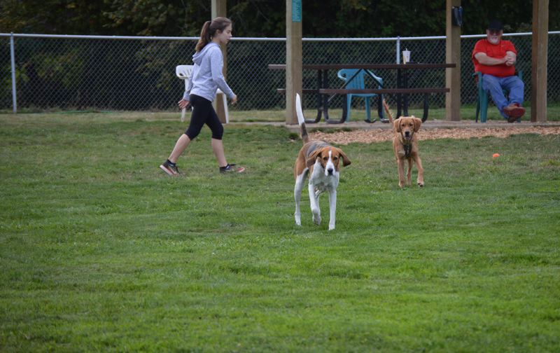 SPOTLIGHT FILE PHOTO - Dogs enjoy grass fields at the Scappoose Dog Park. A new citizen group, Friends of Scappoose Parks, aims to take on parks improvement and fundraising projects on behalf of recreational areas in Scappoose.