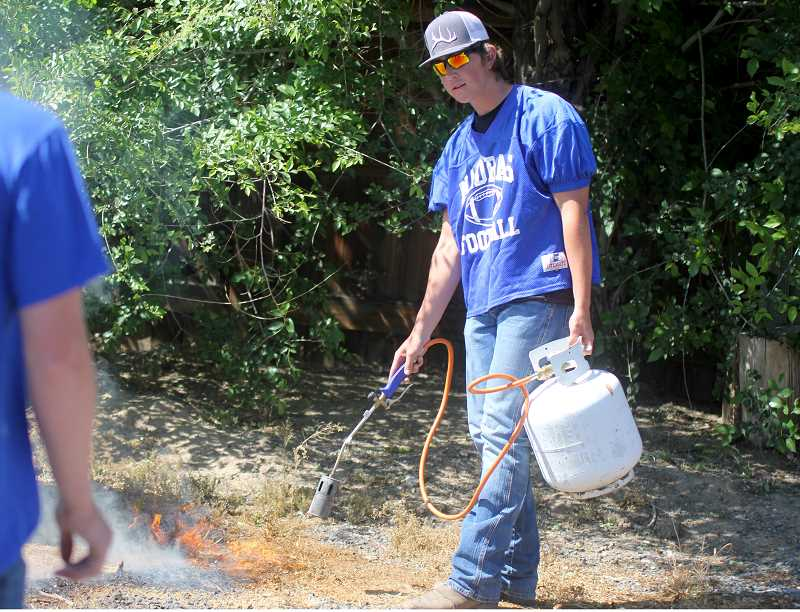 STEELE HAUGEN - Seth Colton burns weeds during the football team's service day.