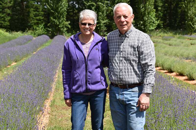 ESTACADA NEWS PHOTO: EMILY LINDSTRAND - Mary and Bill Jabs of Eagle Creek Lavender have 20,000 plants and 12 varieties of the flower on their property. They will host the annual Eagle Creek Lavender Festival  from 10 a.m. to 4 p.m. Saturday, June 23 and Sunday, June 24.