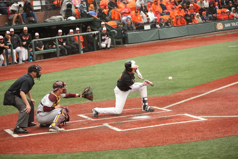 TRIBUNE PHOTO: SCOTT CASSIDY - Oregon State's Zak Taylor lays down a sacrifice bunt.