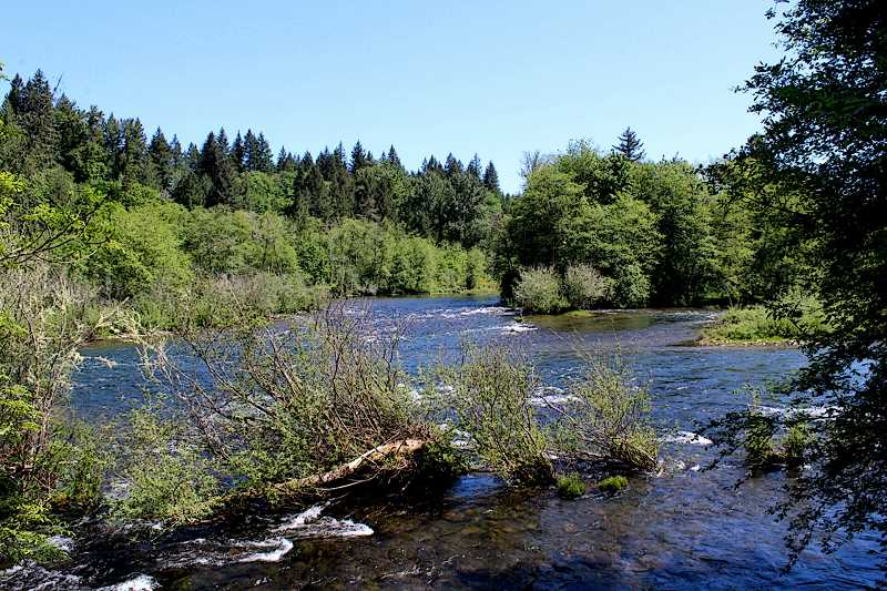 CONTRIBUTED PHOTO: MAYA GOKLANY - The Clackamas River and neighboring areas will be the focus of the Walama Restoration Projects upcoming BioBlitz event at Milo McIver State Park.