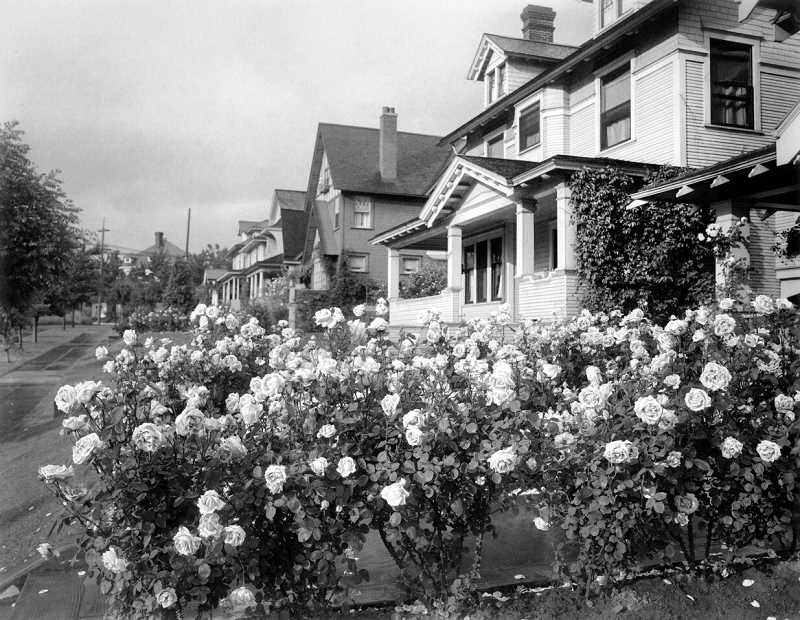 COURTESY PHOTO - The original exhibit Madame Caroline Testout: The Rose that Made Portland Famous, is on view through June 17.