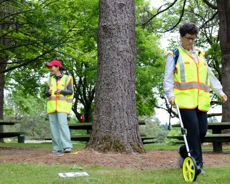 TRIBUNE PHOTO: ZANE SPARLING - A volunteer uses a measuring wheel on Saturday, June 23 in Gabriel Park in Portland.