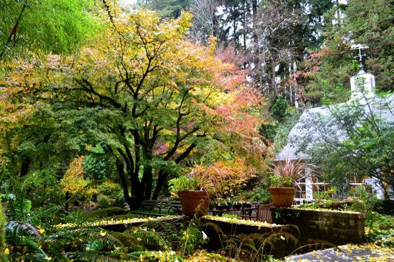 PHOTO COURTESY PORTLAND PARKS AND REC - Leach Botanical Garden