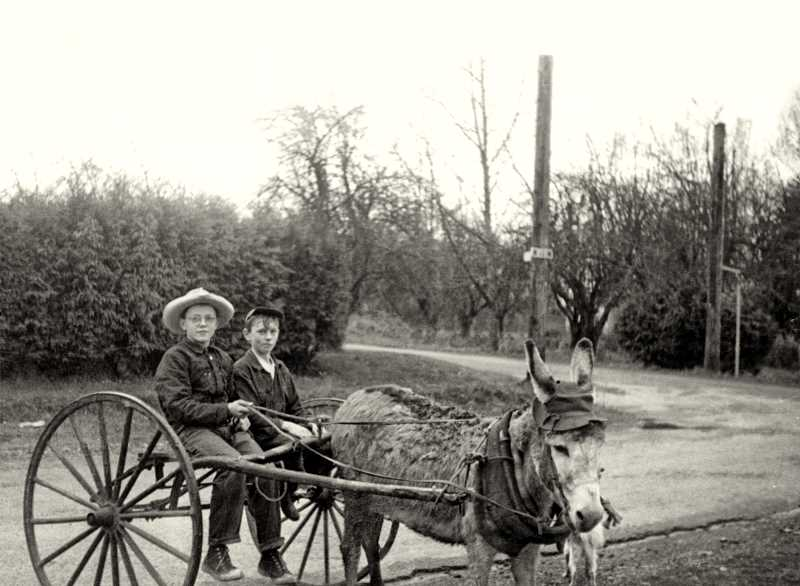 OLD OREGON PHOTOS - In this 1949 snapshot, Willamette-area kids Duane David and Jay Dunwoodie take donkey Clarabelle, a seasonal employee at Oaks Park Amusement in Portland, for a ride near 12th Street.
