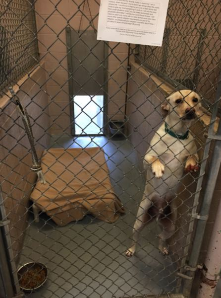 COURTESY MULTNOMAH COUNTY - Enrichment activities to keep dogs sane and address behavioral issues are considered key to animal shelters. But dogs kept at the Multnomah animal shelter frequently are not even given toys, auditors found.