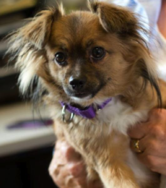 COURTESY MULTNOMAH COUNTY - This dog was returned to the shelter after having bitten a dog trainer. It then was adopted out, and it bit its new other. It was returned and then transferred to an animal rescue nonprofit.