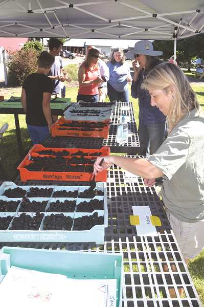COURTESY PHOTO - As always, there will be berry tasting to check out the latest varieties being developed.