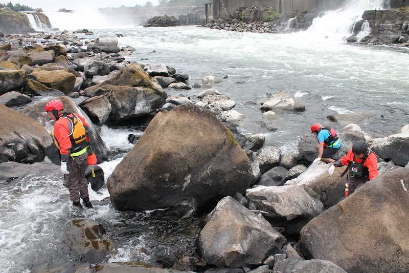 REVIEW PHOTO: PATRICK MALEE - Scientists from the Confederated Tribes of Grand Ronde climb the rocks to search for lamprey holes.