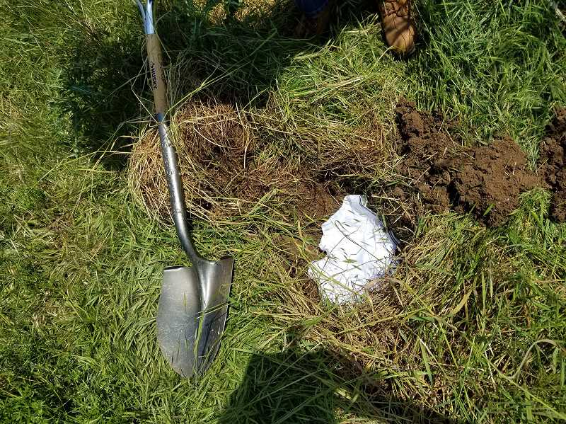 SUBMITTED PHOTO  - The Soil Your Undies Challenge requires participants to bury 100 percent cotton briefs 6-8 inches deep and leave them in the ground for two months.