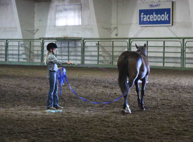 HOLLY SCHOLZ/CENTRAL OREGONIAN - Corley Holliday shows her yearling mustang, Cheyenne, during the ground training class at the 4-H Horse Fair.