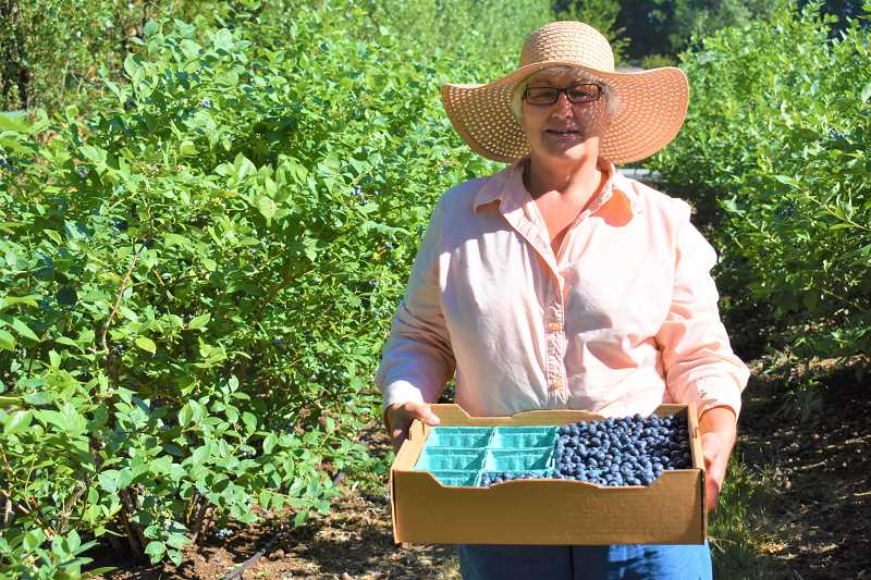 ESTACADA NEWS PHOTO: EMILY LINDSTRAND - Lina Davis of the Eagle Creek based Davis Farms shows off a collection of blueberries she's picked. The farm has early blues, jubilees and dukes, among other varieties of blueberries, available for picking.
