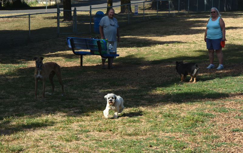 SPOTLIGHT PHOTO: COURTNEY VAUGHN - 'Pearl' (center) romps through the grass at the Columbia City Dog Park alongside other dogs. Experts suggest giving pets exercise to reduce stress, but avoid walking dogs on hot concrete or asphalt.