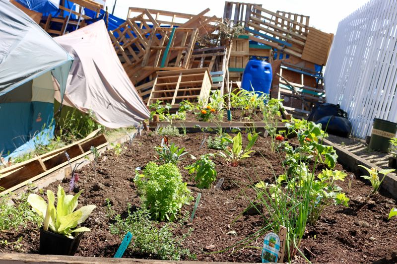 TRIBUNE PHOTO: ZANE SPARLING - Until the camp was cleared, this community garden sprouted at the Occupy ICE protest camp in Southwest Portland.