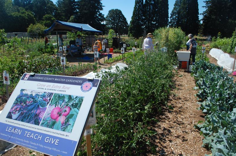 RAYMOND RENDLEMAN - Volenteers at work this year at the Master Gardeners' Giving & Learning Garden at Clackamas Community College in Oregon City.