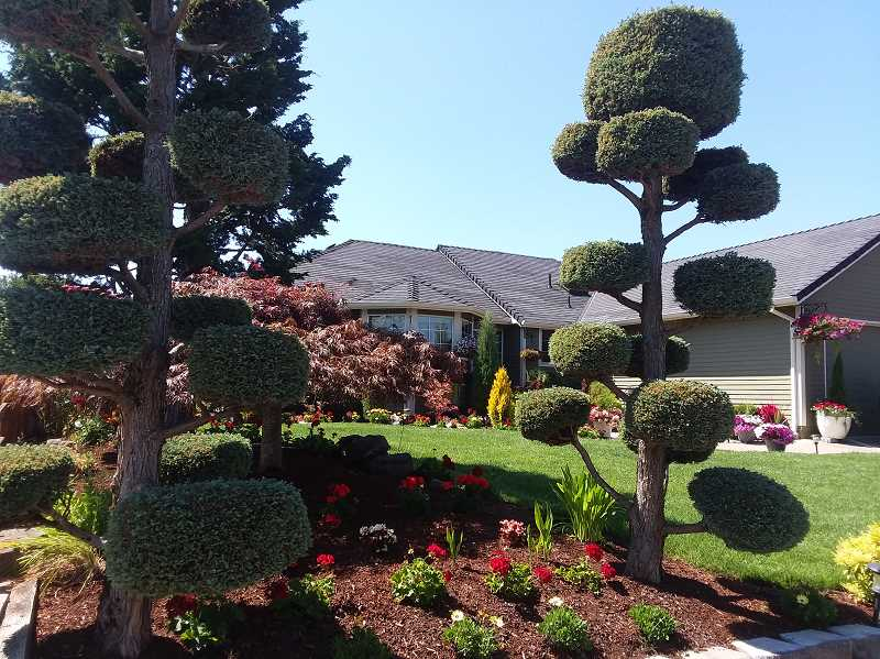 There's a lot to like in the yard of Maria and Jose Zamora. They were selected as the August recipient of the Canby Garden Club's Yard of the Month award.