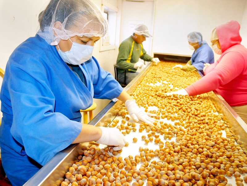 GRAPHIC FILE PHOTO - Hazelnut processors in Oregon have been the brunt of tariffs and valued added taxes for many years.