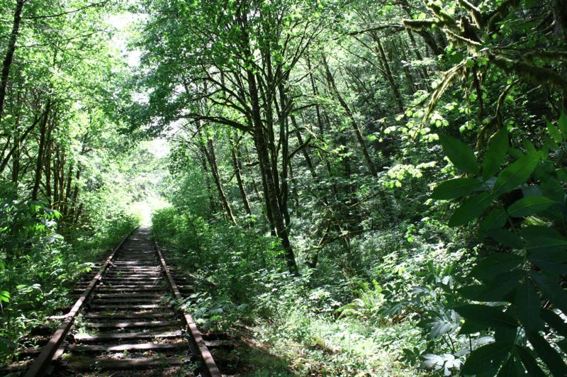 FILE PHOTO - Disused railroad tracks run through the wilderness of the Oregon Coast Range. Trail enthusiasts are planning to convert the rail corridor into a multipurpose trail linking Banks and Tillamook.