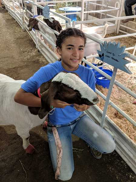 JOHN BAKER - Winter Palmateer shows off one of her goats, Caiya, during a break from the show ring. She is a member of Molalla's Blueberry Sunrise group.