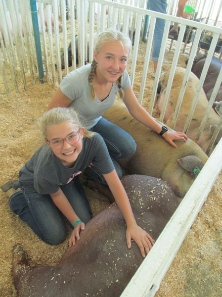 PHOTO BY DICK TRTEK - Molalla residents and sisters Bekah and Gracie Neely enjoy showing their pigs Lucy and Sully at the fair.
