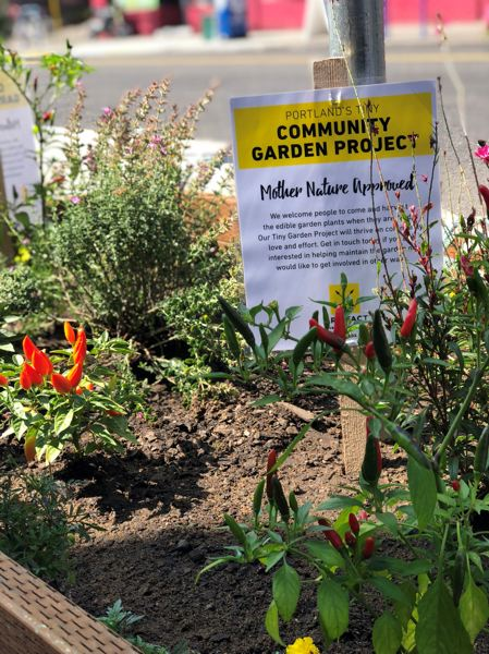 COURTESY JOSHUA RYAN - The new community garden created by Joshua Ryan and Leah Meijer in August.